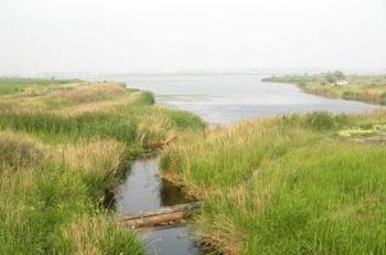 Река Чёрная фото