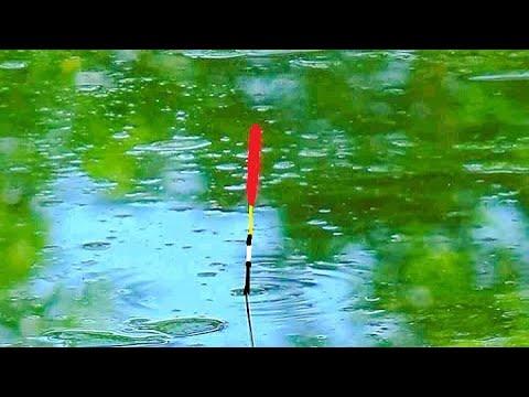 ВИДЕО: Ловля плотвы на удочку Особенности ловли
