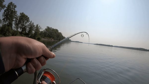 ВИДЕО: ЛОВЛЯ ЩУКИ И СУДАКА ЛЕТОМ! На что ловить щуку в Августе? Рыбалка с отцом на спиннинг