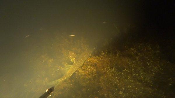 ВИДЕО: Подводная охота ночью. Новый свет. Добыча линя и щуки.