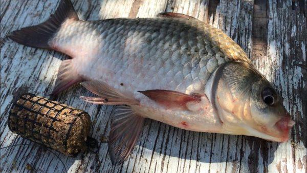 ВИДЕО: Рыбалка на фидер   фидерная рыбалка на карася   ловля на фидер   фидер для начинающих   рыбалка 2020