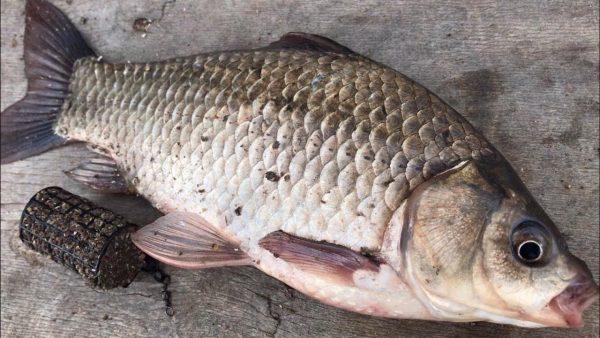 ВИДЕО: Рыбалка на фидер   ловля карася на фидер для начинающих   рыбалка 2020