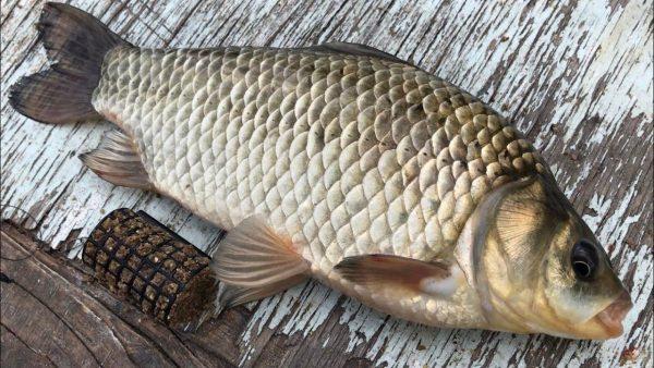 ВИДЕО: Рыбалка на фидер   ловля на фидер крупного карася   фидерная рыбалка на карася  как ловить на фидер