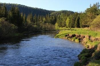 Река Базаиха фото