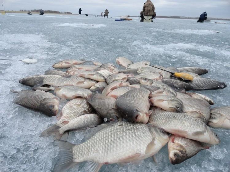 Чукотка рыбалка фото
