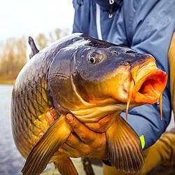 большой улов рыбы