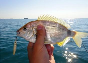 виды рыб в Севастополе