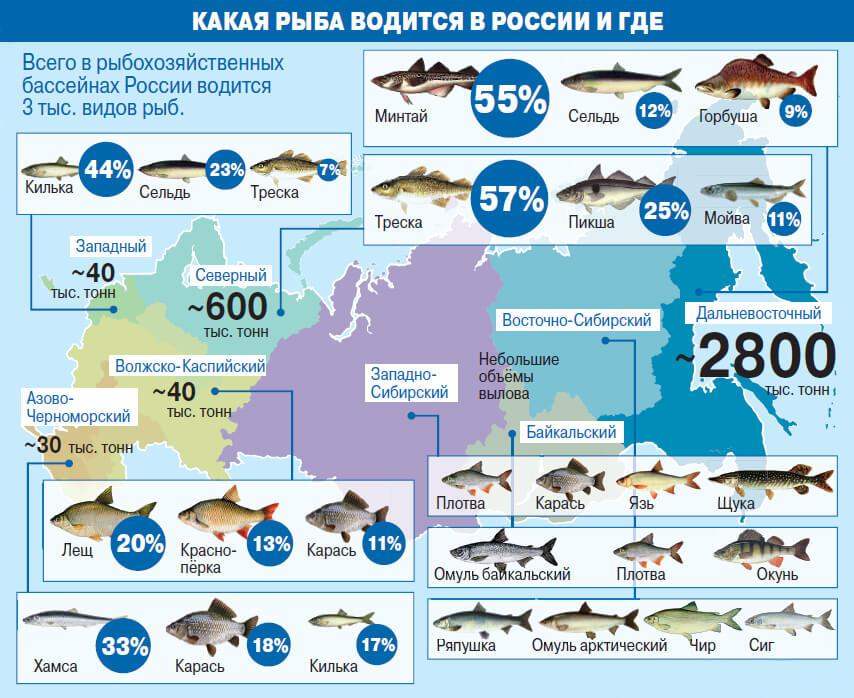 какая рыба водится в России и где ее ловить - КАРТА