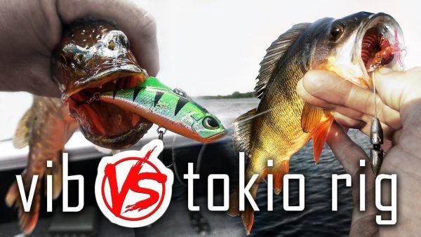 ВИДЕО: Бешеный клёв в жару! Токио риг против раттлина