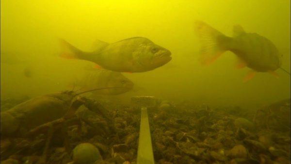 ВИДЕО: Эксперимент | реакция рыбы на жмых | сколько здесь рыбы: окунь, щука, карась, плотва | рыбалка 2020