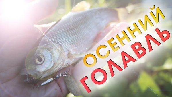 ВИДЕО: Ловля голавля на спиннинг ультралайт / рыбалка осенью 2020