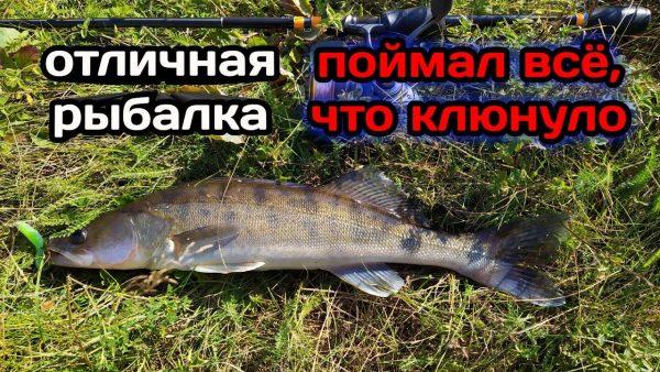 ВИДЕО: Ловля щуки и судака на джиг. Рыбалка на реке.