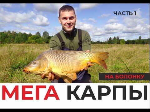ВИДЕО: МЕГАКАРПЫ НА БОЛОНКУ! Удочка в дугу, фрикцион визжит! Огромные дикие рыбы! Часть 1