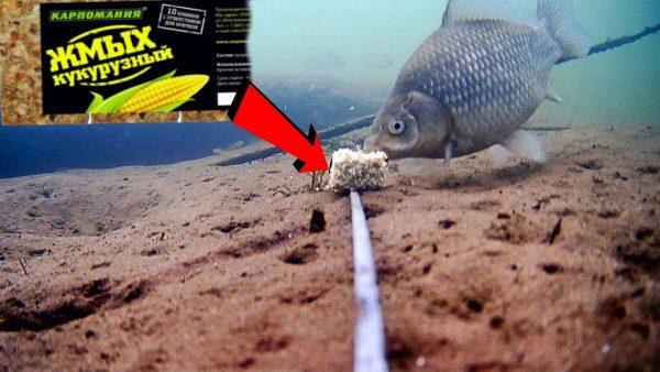 ВИДЕО: Много РЫБЫ! Кукурузный жмых в действии! Подводная съемка