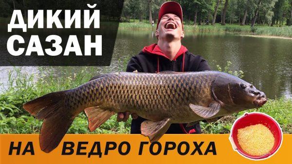 ВИДЕО: ОГРОМНЫЙ САЗАН на фидер, рыбалка с ночёвкой, выжидаем трофей