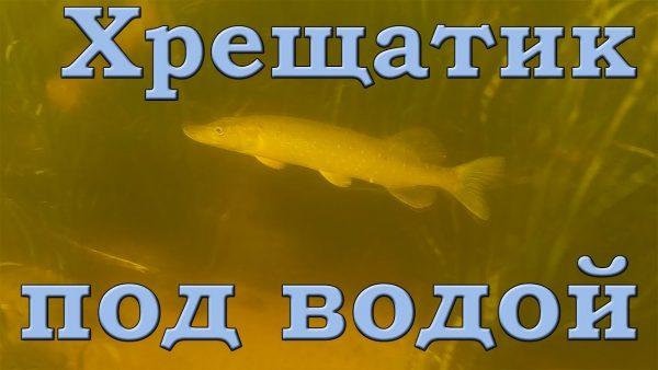 ВИДЕО: Хрещатик под водой. Дельта Роси. Подводная съемка. Щука, окунь, плотва, густера...
