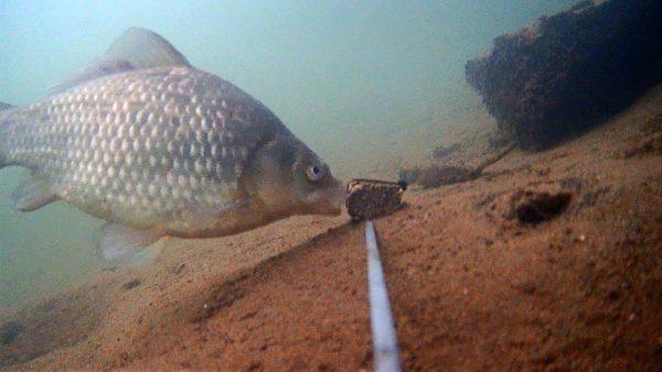ВИДЕО: Жмых подсолнечника с Коноплёй! Реакция рыбы! Карась, судак. Подводная съемка на закате.