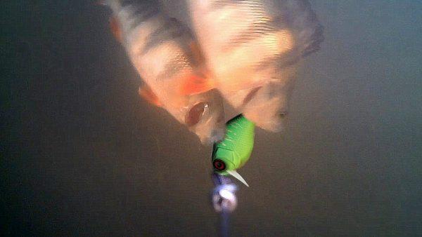 ВИДЕО: Рыбалка на Спиннинг с Подводными камерами! Атака Щуки и Окуня на воблер! Подводная съемка