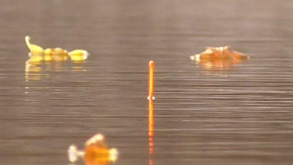 ВИДЕО: Рыбалка на карася осенью 2020. Много рыбы на удочку.