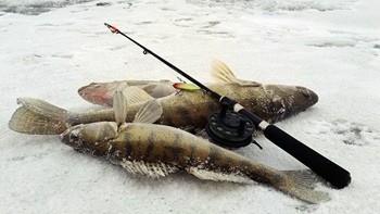 Ловля судака в феврале