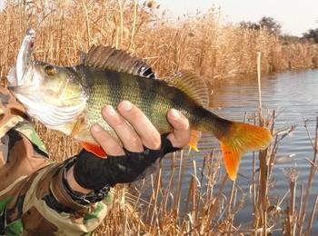 Рыбалка в сентябре на окуня