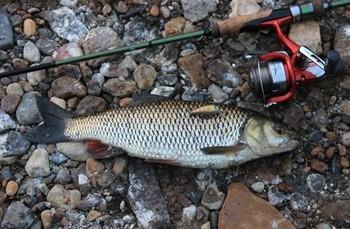 Рыбалка на жереха в октябре