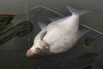 Рыбалка на леща в июле