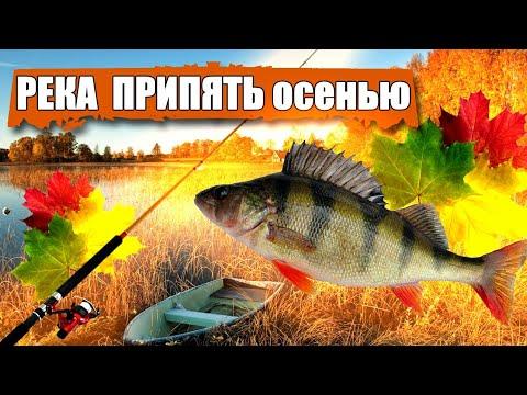 ВИДЕО: Река Припять осенью, окунь на танту, коптим рыбу