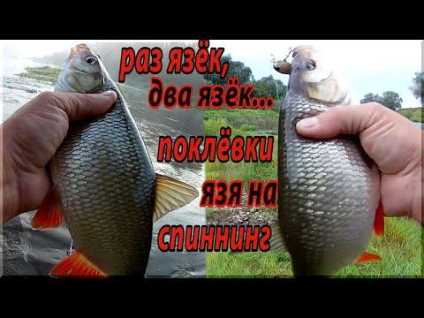 ВИДЕО: Только лучшие поклевки Язя на спиннинг! Ловля ЯЗЯ на воблеры. Рыбалка на малой реке.