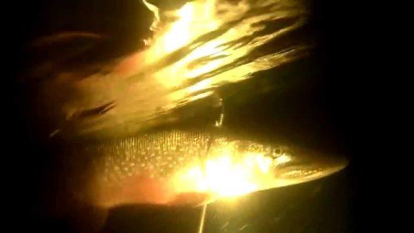 ВИДЕО: Нашел под водой и бревно и щуку