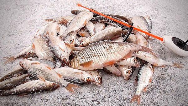 ВИДЕО: Зимняя рыбалка 2020 и опасный лед! Ловля зимой на мормышку. Подводная съемка.