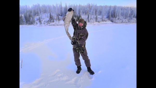 ВИДЕО: Подледная рыбалка на Налима в Якутии