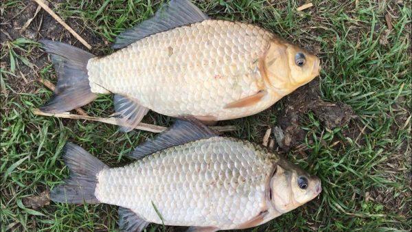 ВИДЕО: Рыбалка на фидер. Фидерная рыбалка на карася. Фидер для начинающих. Рыбалка 2021