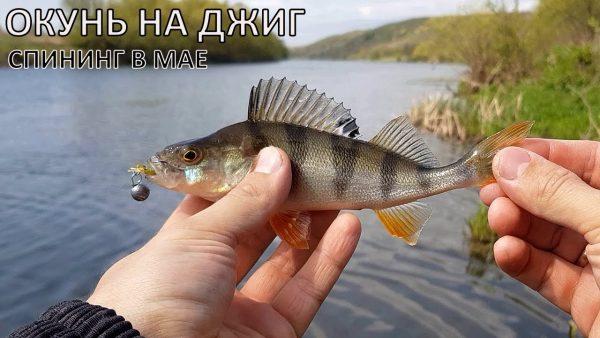 ВИДЕО: Рыбалка на ЛАЙТ СПИНИНГ на реке Дон | ОКУНЬ на Fanatik