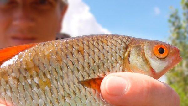 ВИДЕО: Ловля плотвы на поплавочную удочку после ливня. Рыбалка на поплавок летом 2021