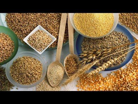 ВИДЕО: Почему карп и карась любят зерновые прикормки?
